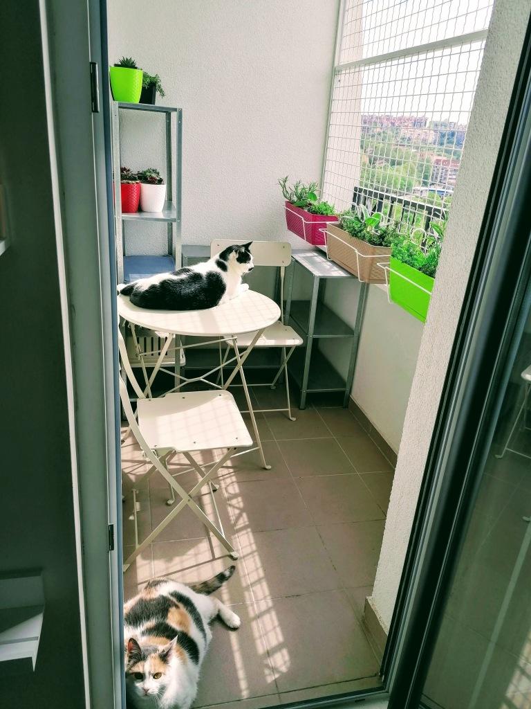 mace i selidba, kućni ljubimci i seldiba, mačke i selidba, privikavanje mačaka na novi stan, privikavanje mačaka na posip, posip za mace, toalet za mace, zaštitna ograda za terasu, ograda od grifovane žice, rasklopivi kavez, rasklopivi transporter,